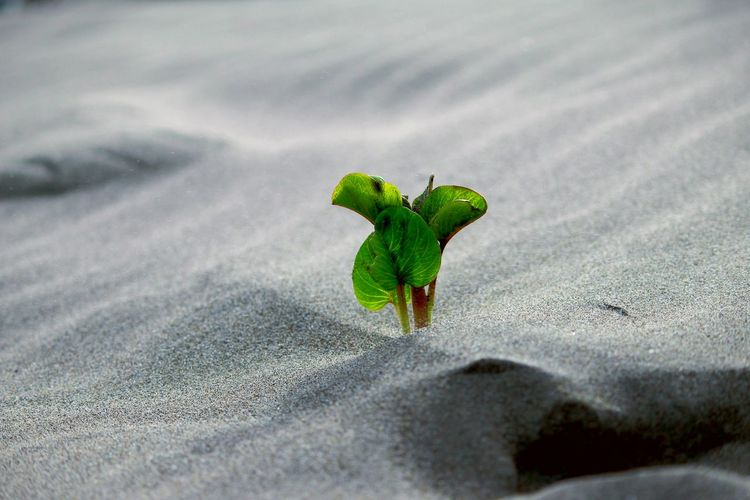 Lonely Plant Plant Lonely Green Beautiful Nature Mexico Landscape Brown Air Contrast Leaf Close-up Green Color Sand Dune Desert Arid Climate Arid Sand