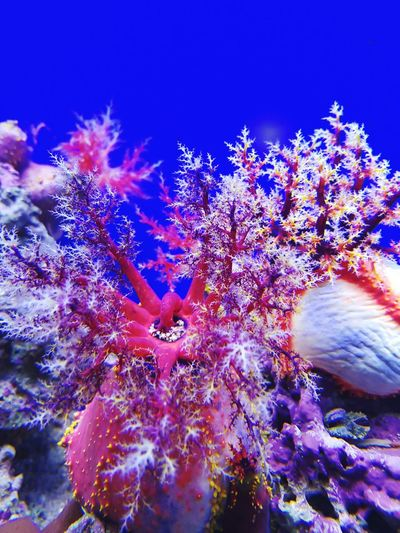 Underwater Sea Life UnderSea Coral Sea Vibrant Color Beauty In Nature Tropical Climate Water Plant Nature Backgrounds Blue Sea Mosqarium аквариум Multi Colored Aquarium UnderSea No People Animal Wildlife москвариум Blue Aquarium Life