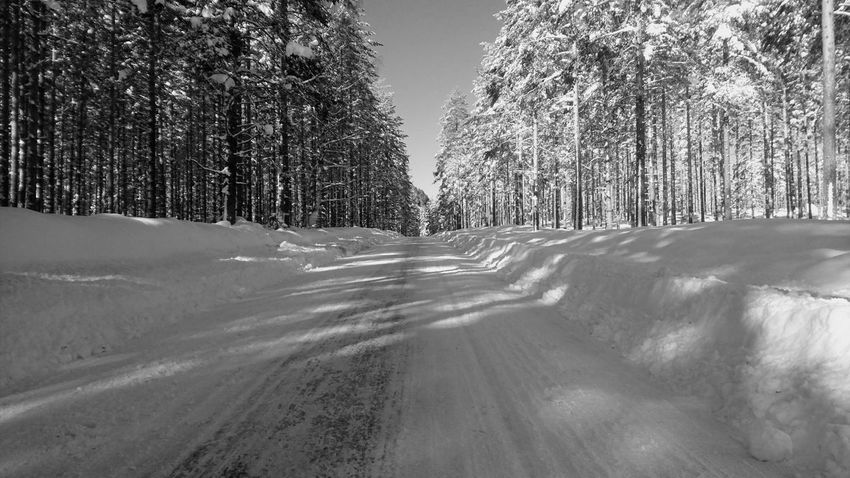 Black And White Shadow Shadows Sunny Springtime Winter Snow Shadows & Lights Sun Nice Day White Tree Road Winter Sky Landscape Pine Woodland Pine Tree Pine Wood Snow Covered