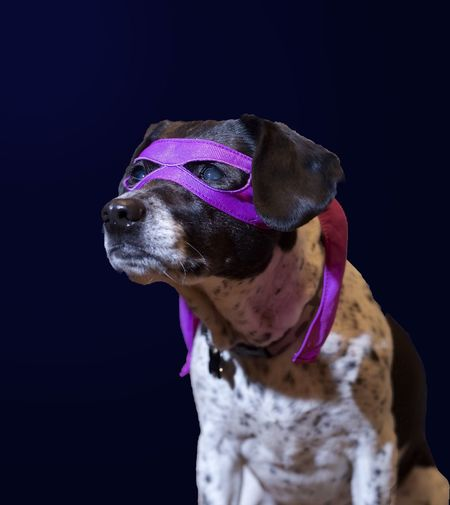 Pup Dog Vigilante Superhero