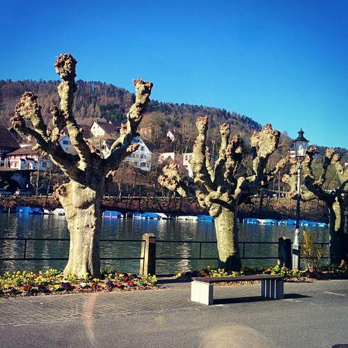 Eglisau Rhein Switzerland River