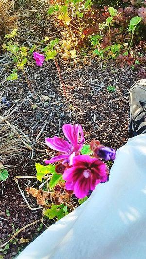 Purple Flowers. Arcata California Plaza.... Taking Photos Hidden Gems  Magic... Loving Life! ! ! MY EYES EXPECT TO. WIN!!!