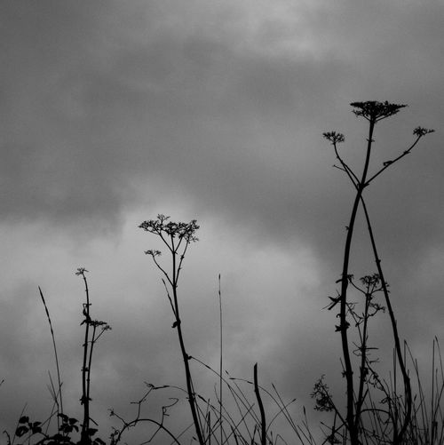Low angle view of silhouette plants against sky