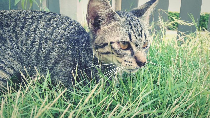 Cute Cat 😻 Cat♡ Outdoors Beauty In Nature No People