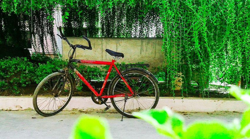 Cycle Cycle Of Life First Eyeem Photo Samsung Bicycle Parking Bicycle Heaven Samsung India Allahabad Bicycle Bicycles Bicycle Lane Long Goodbye