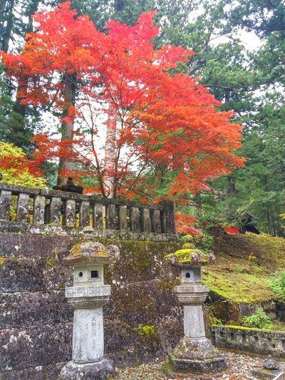 Moos Neglected Beauty Loneliness Sad 石灯籠 Japanese Lantern Japanese Stone Lantern Japan Momiji Autumn colors Autumn Leaves 紅葉 日光市 Day Tree No People Built Structure Growth Nature Beauty In Nature Red Outdoors Autumn Architecture Building Exterior Sky