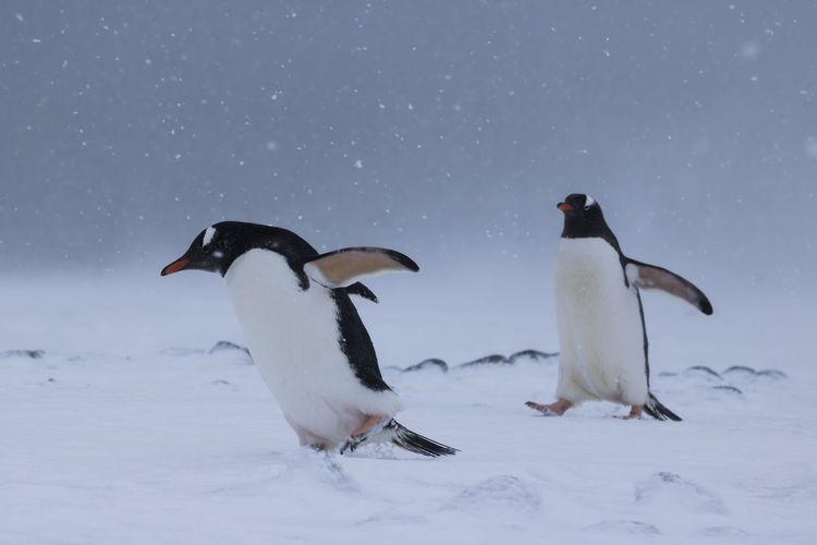 Birds on snow covered landscape against sky