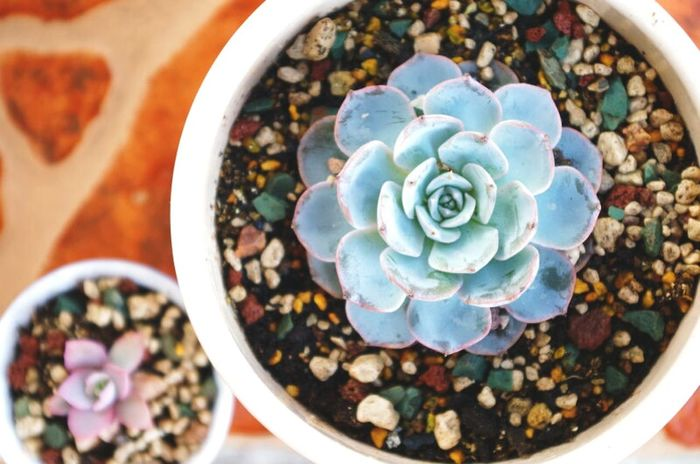Showcase:January Succulents Succulent Plants