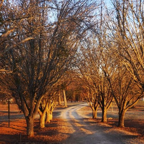 Dirt trail Bare Tree Tree Autumn The Way Forward Winter Nature Outdoors Road Scenics Tranquility No People Branch Beauty In Nature Tranquil Scene