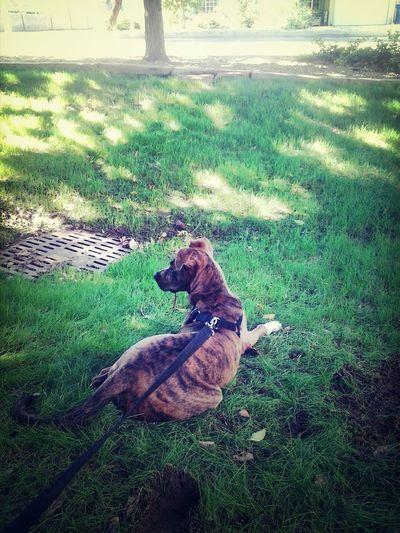 Mansbestfriend Dog Love Myprotector Pradaalexander