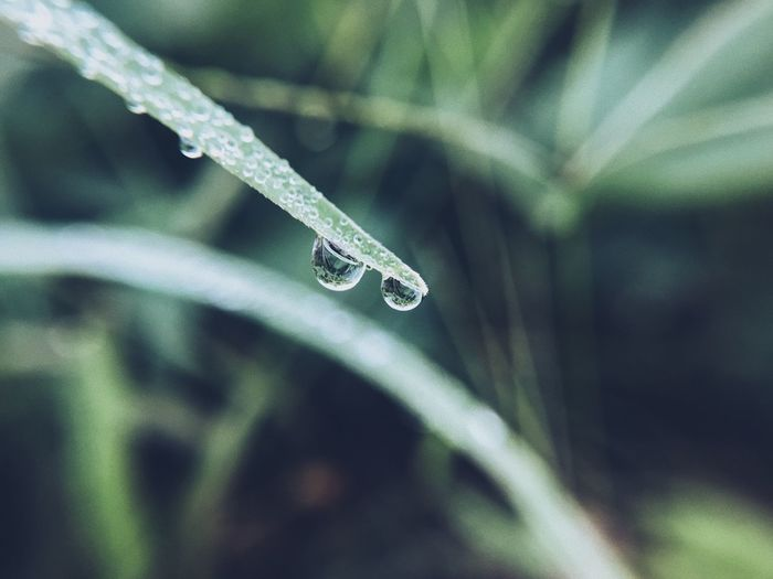 Drop Nature Water Beauty In Nature Cold Temperature Weather Focus On Foreground Day Wet Close-up Droplet Plant Outdoors Purity No People Fragility Frozen Growth Freshness Leaf
