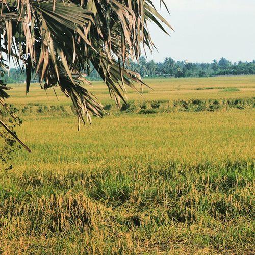 Farmer Rice Greenspace