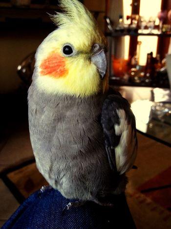 My friend hahaha Bird Cute Colors Blush Yellow Friends