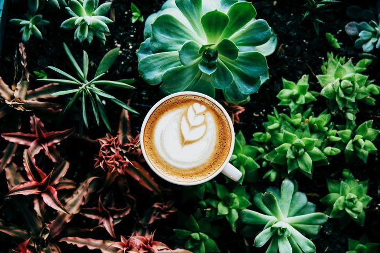 Directly above shot of cappuccino amidst succulent plants