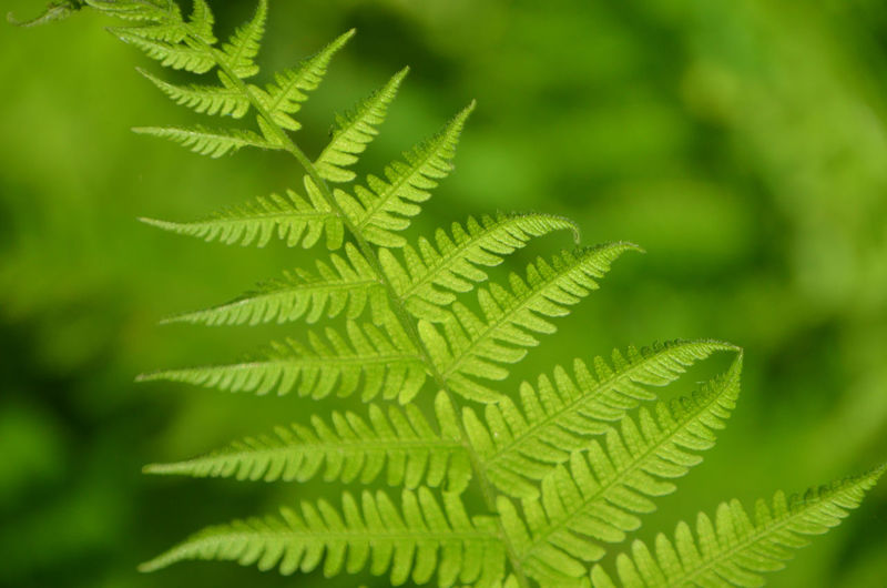 Beauty In Nature Branch Close-up Day Fern Foliage Plant Green Color Green Color Growth Leaf Nature No People Outdoors Plant Tree