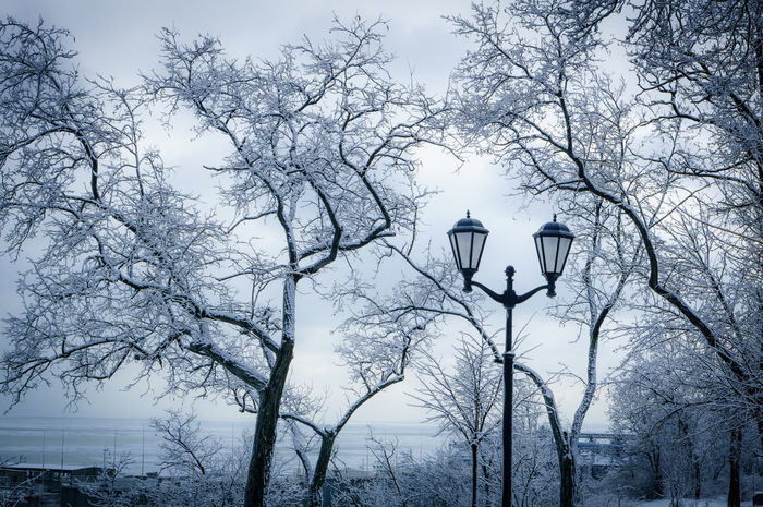 Sad winter Architecture Autumn Bare Tree Branch Built Structure Cold Cold Temperature Lamp Post Lighting Equipment Low Angle View No People Outdoors Park Sky Street Light Tranquility Tree Tree Trunk Weather Winter