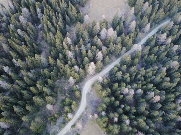 Drone  Trees Aerial View Beauty In Nature Curve Day Forest Forest Photography Forestwalk Growth High Angle View Landscape Mountain Nature No People Outdoors Road Scenics Tranquil Scene Tranquility Tree Winding Road
