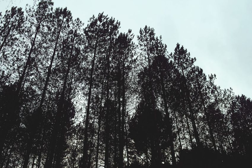 Tree Woods Forset