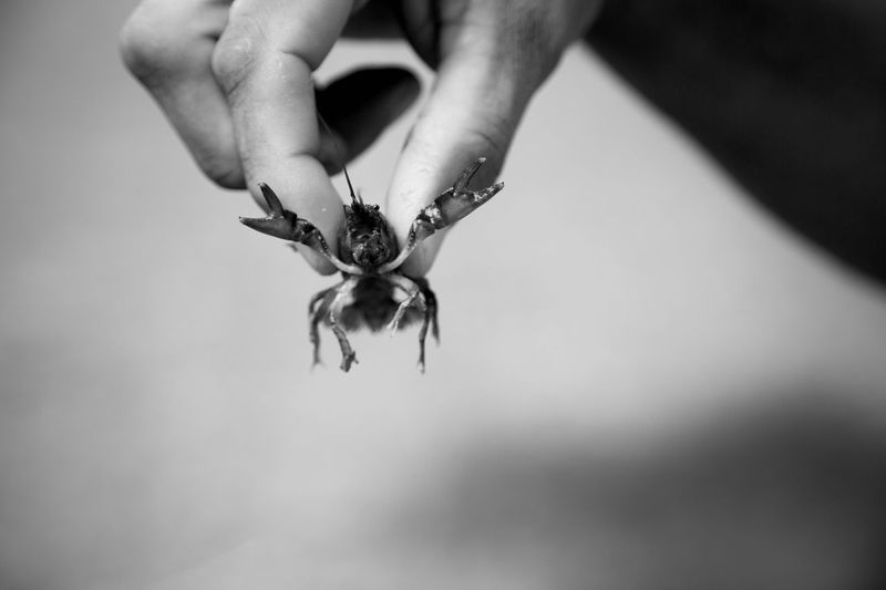 Human Hand Real People Human Body Part Human Finger One Person One Animal Animals In The Wild Holding Animal Themes Close-up Animal Wildlife Day Outdoors Flower Nature People Crawdad Crayfish Claw