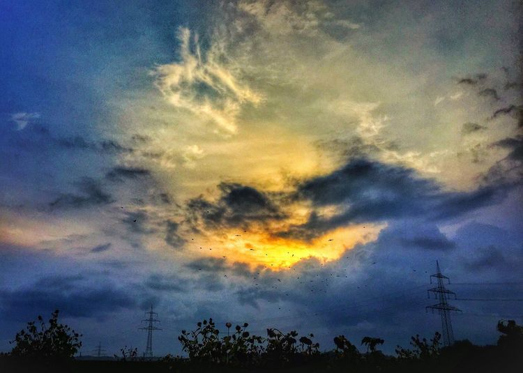 Tree Sunset Silhouette Scenics Sky Tranquil Scene Low Angle View Cloud Tranquility Beauty In Nature Nature Idyllic Blue Cloud - Sky Outline Growth Majestic Treetop High Section Outdoors Pylon Power Line  Sunflowers Sunflower Patch Birds