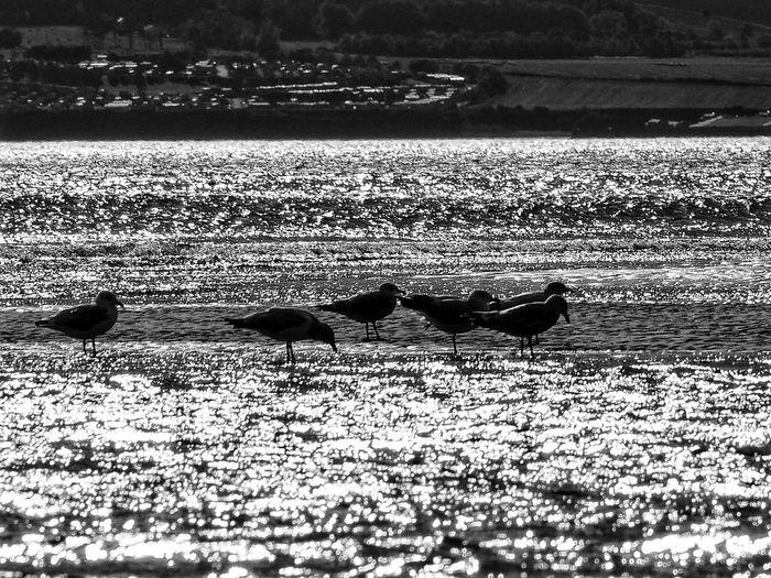 Animal Themes Animals In The Wild Sand Day Nature Outdoors No People Animal Wildlife Sunlight Water Beach Shadow Bird Tentsmuir Forest Scotland Scottish Landscape Blackandwhite Photography Scottishrowan Olympus Om-d E-m10