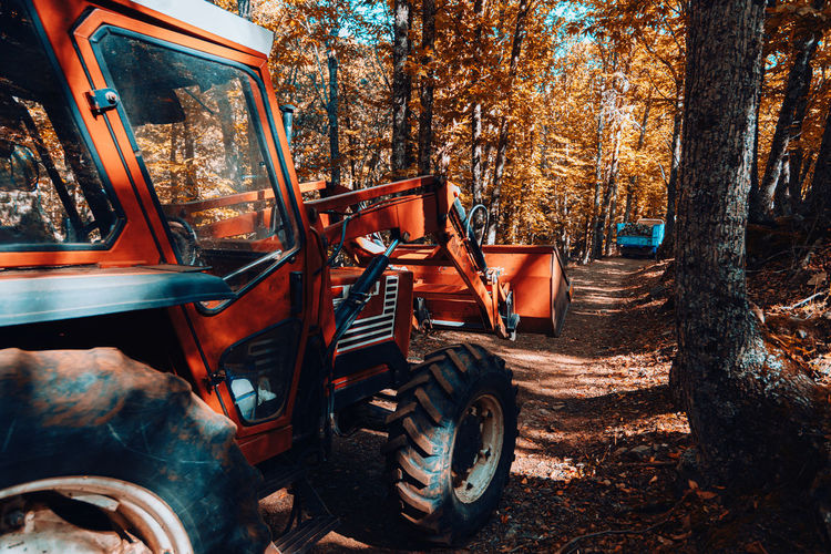 Vintage car in forest during autumn