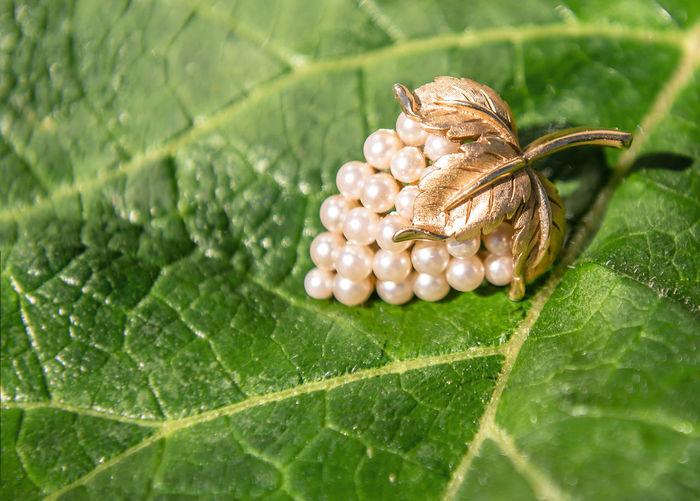Close-up of brooch on leaf