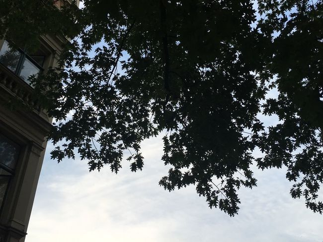 Tree Low Angle View Sky Day No People Growth Outdoors Nature Branch Beauty In Nature