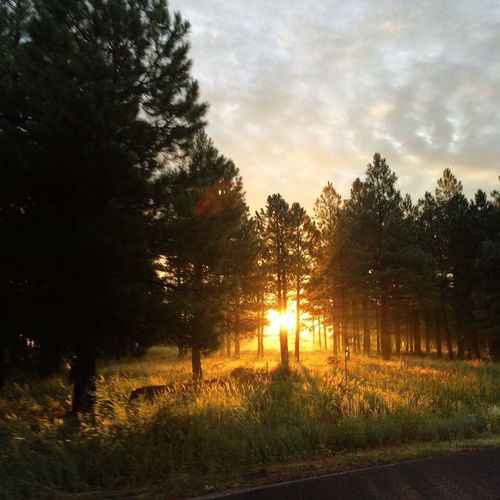 Flagstaff Az Flagstaff, Az Arizona First Eyeem Photo