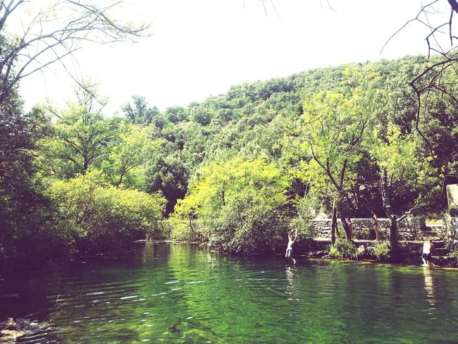 Weeks Forest Paysage Fun Lac Water Green