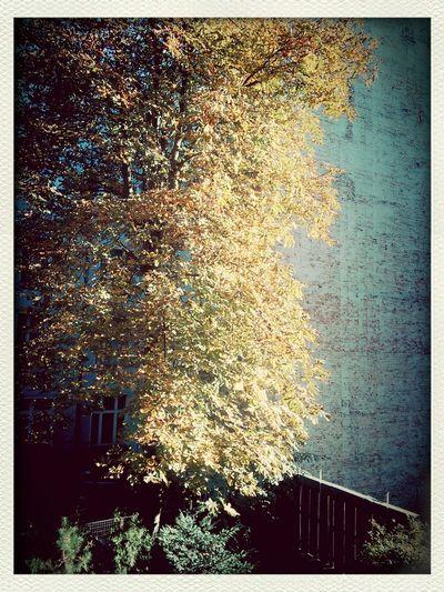 Herbst vor dem Fenster... außerdem mal ein Testbild mit dem Tablet... Taking Photos Friedrichshain Colors Of Autumn Nexus 7