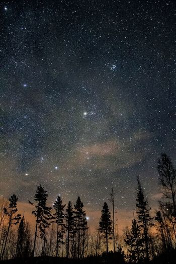 Stars above us. Star - Space Sky Astronomy Tree Night Space Galaxy Space And Astronomy Constellation Nature Beauty In Nature Outdoors No People Photo Nature Tree Beauty In Nature EyeEm Star Field Check This Out Canon