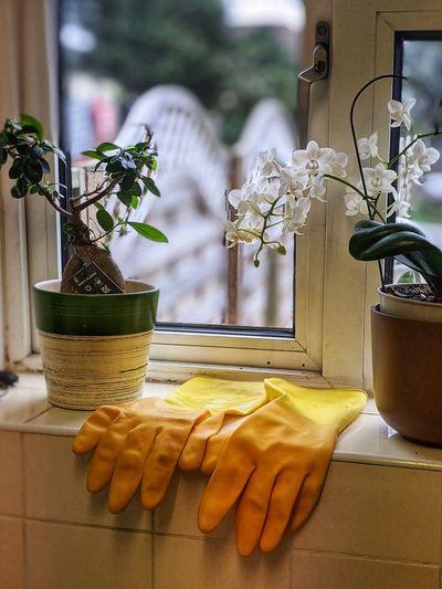 Close-up of kitchen windowsill at home