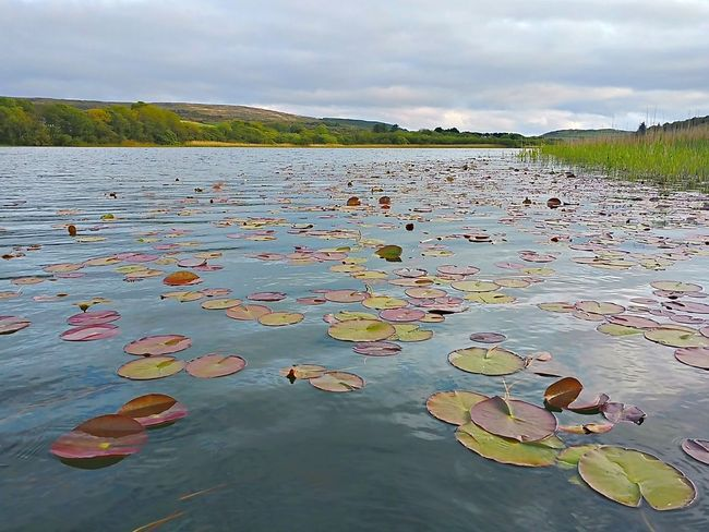 Landscape Water Outdoors No People Day Scenics Floating On Water Lake Beauty In Nature Nature Sky Nenufares Lily Pads Idilic Scene Mobile Photography Liss Ard West Cork