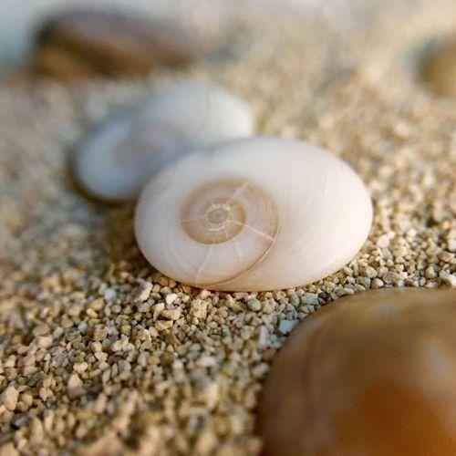 Shell Sand White IPhoneography Iphone6s Olloclip Olloclip_macro Tiny Shells EyeEm Best Shots - Macro / Up Close Shells