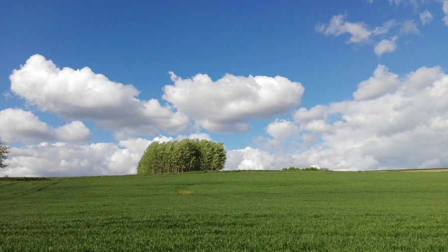 Group Of Trees Clouds And Sky Tree Rural Scene Agriculture Blue Field Summer Sky Grass Landscape Cloud - Sky Plantation Stay Out