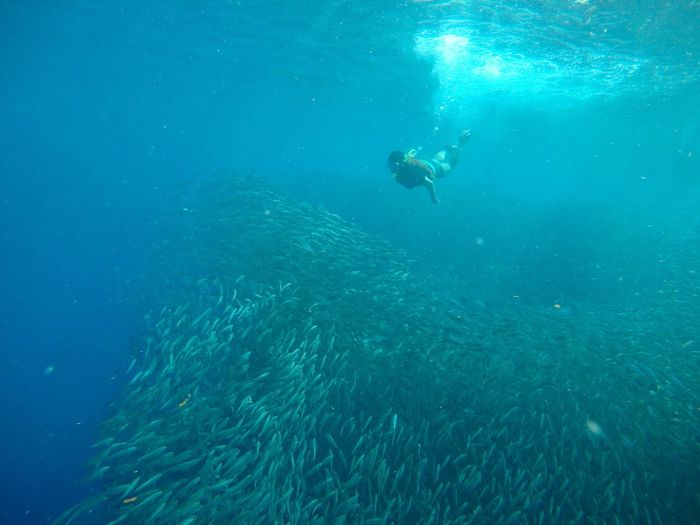 Moalboal Sardine Run is absolutely impressive. EyeEm Animal Lover EyeEmNewHere EyeEmBestPics Eyeem Philippines EyeEm Nature Lover Sardine Run Free Diving Underwater Adventure Sea UnderSea Water Sport Swimming Exploration First Eyeem Photo EyeEmNewHere EyeEmNewHere EyeEmNewHere The Great Outdoors - 2018 EyeEm Awards The Traveler - 2018 EyeEm Awards The Great Outdoors - 2018 EyeEm Awards