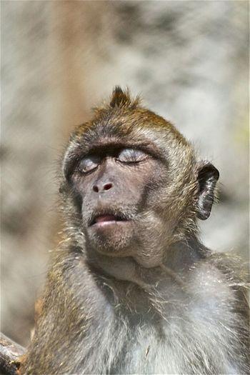 Monkey Monkey Face Animal
