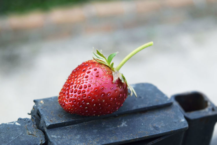 Close-up of strawberry outdoors