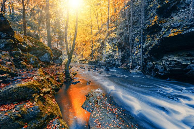 Stream flowing through rocks in forest during autumn