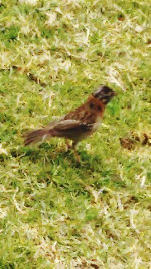 Aves Ave Aves 🐥🐤🐥 Pajaros Pajaro Pajaroenelpasto
