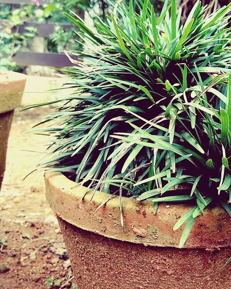 Day Outdoors High Angle View No People Plant Nature Close-up The Week On EyeEm