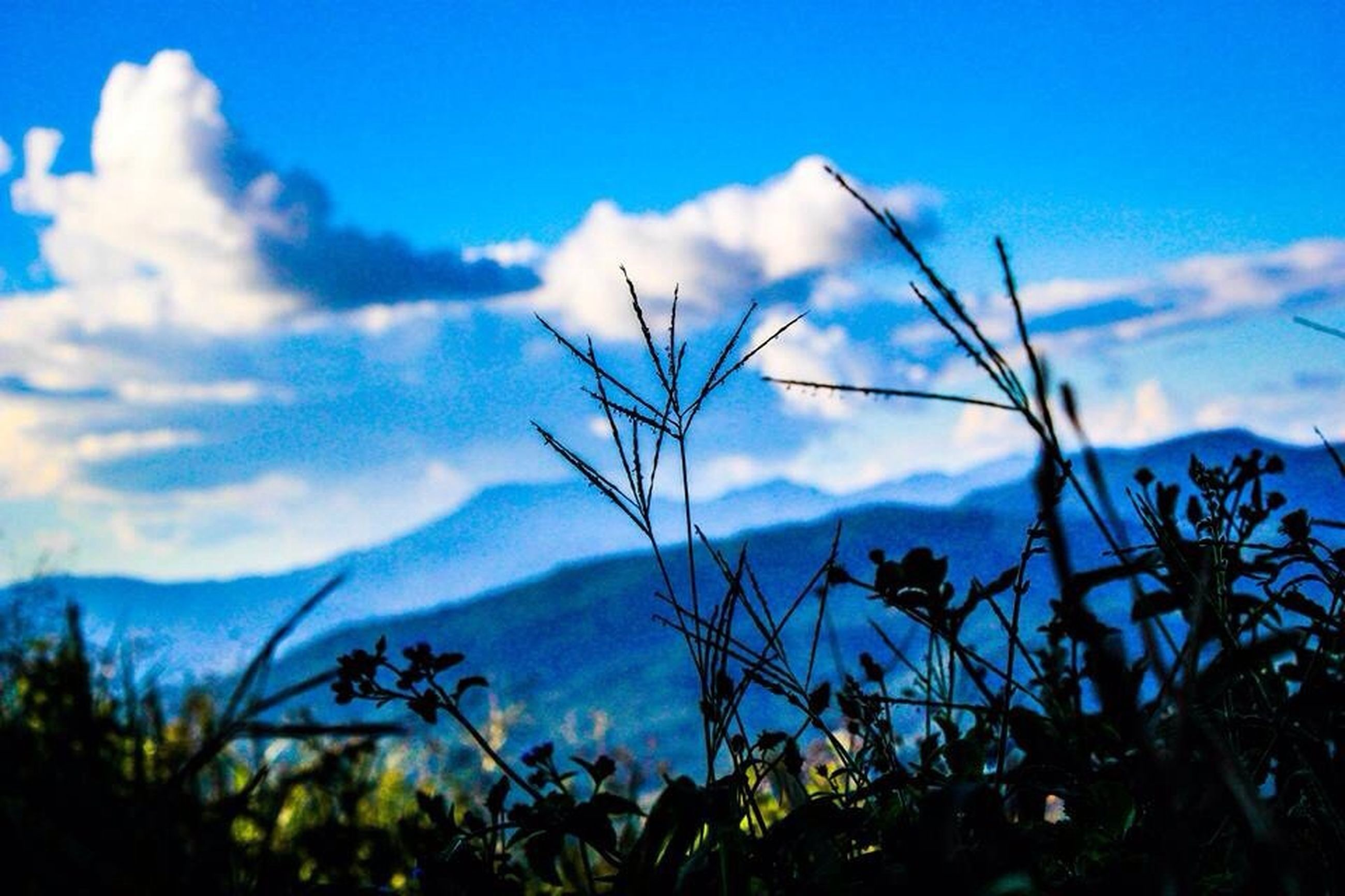 sky, blue, tranquility, beauty in nature, nature, tranquil scene, cloud - sky, scenics, cloud, plant, growth, low angle view, landscape, mountain, outdoors, day, no people, non urban scene, idyllic, tree