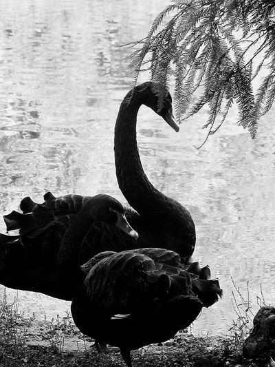 Animales Asturias Nature Photography Natural Black And White Blancoynegro Black & White Animal Photography