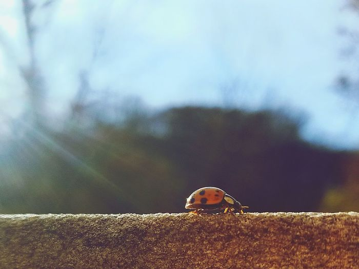 Bug's Life One Animal Bug Bugslife Ladybug LadyBugLove Ladybugs Photography