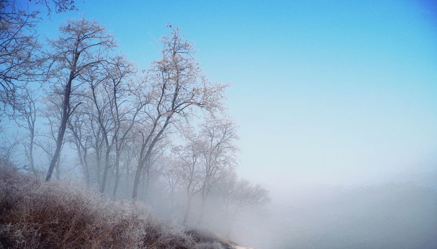 Tree Nature No People Day Outdoors Beauty In Nature Sky Forest Clear Sky Winter Blue Branch Water Freshness Pixelated
