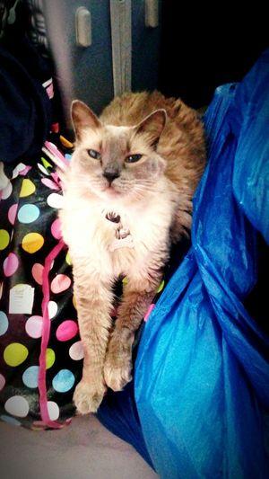 love forever Feline Whisker