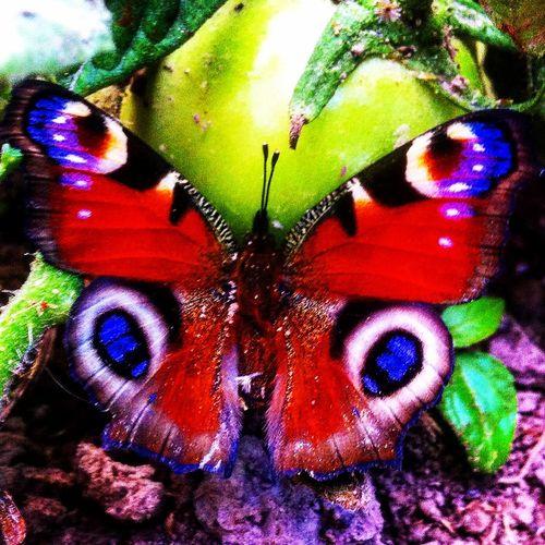 бабочка Природа село Черниговская область