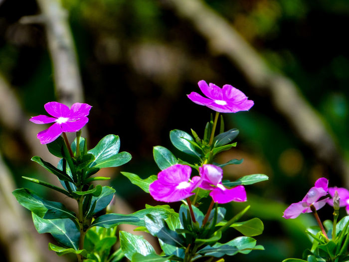 FLORA Flora Flower Head Flower Multi Colored Pink Color Leaf Petal Summer Purple Close-up Magenta Flowering Plant Plant Life In Bloom Blossom Blooming Pollen Stamen