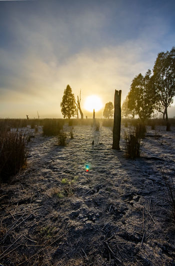Frosty morning in the wetlands Frost HDR Beauty In Nature Cloud - Sky Cold Temperature Land Nature No People Non-urban Scene Outdoors Plant Scenics - Nature Shepparton Sky Snow Sun Sunlight Sunset Tranquil Scene Tranquility Tree Water Winter The Great Outdoors - 2018 EyeEm Awards The Great Outdoors - 2018 EyeEm Awards